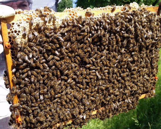 Chci včelařit